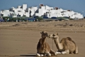 camels-white-city